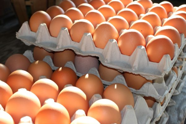 Uova al fipronil, positivo test Marche