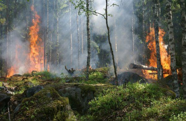 incendi boschivi campania