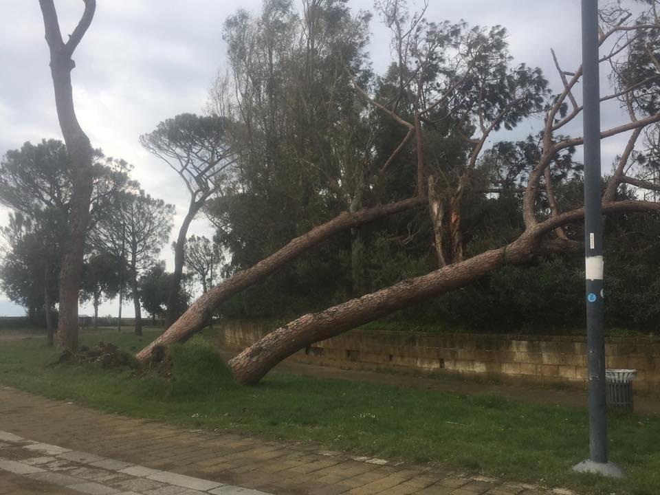 Allerta Meteo a Napoli, atteso vento forte: chiusi tutti i parchi cittadini