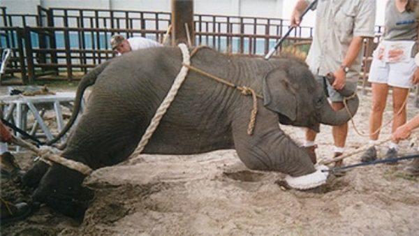 circo con animali vietato