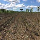 bosco piantato a Giugliano