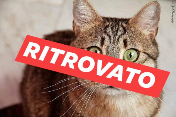 gatto riscatto