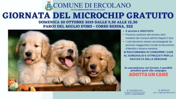 microchip gratuito