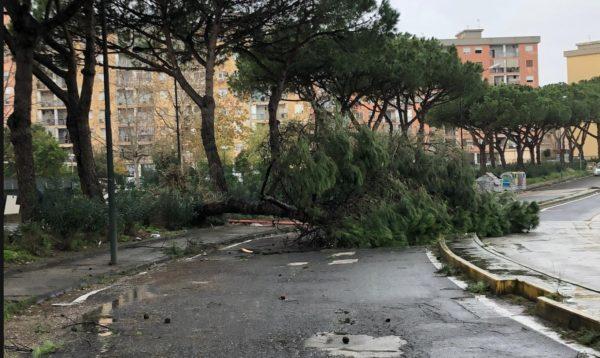 stato calamita alberi