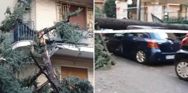 danni maltempo napoli alberi crollo