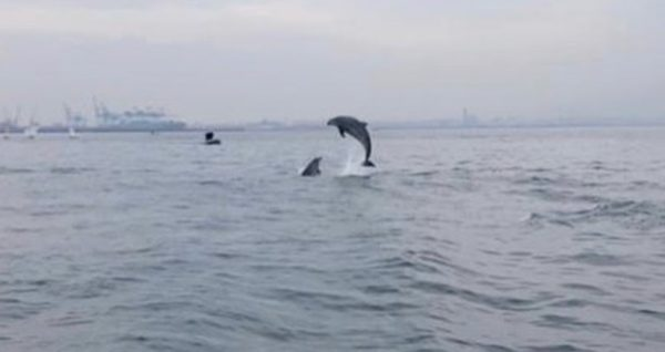 delfini golfo