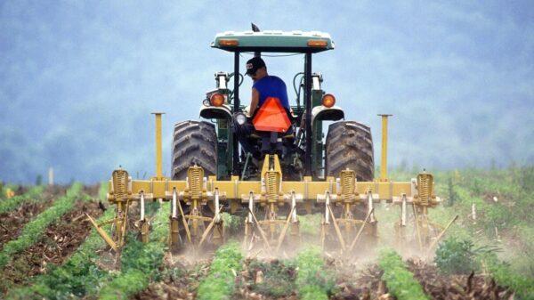 campi agricoli agricoltura agricoltori contadini