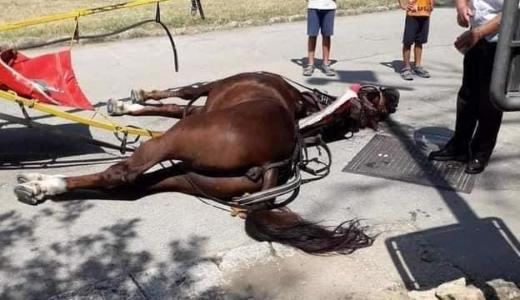 Cavallo Reggia di Caserta