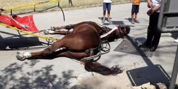 cavallo morto