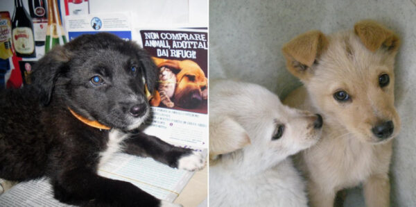 rifugio cani pontecagnano