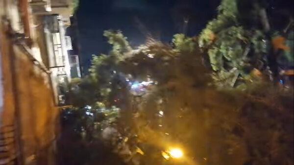 albero piazza cavour