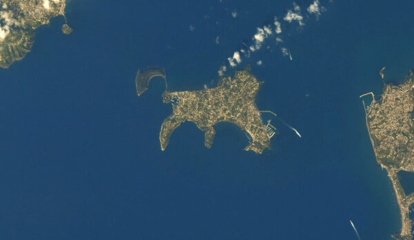 isola Procida gatto