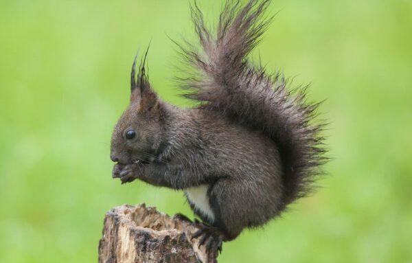 scoiattoli parco matese