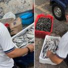sequestro pesce ercolano