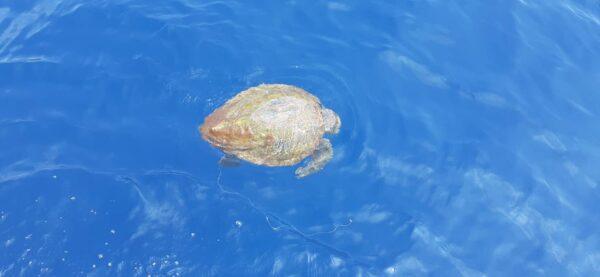 punta campanella tartarughe