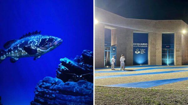 parco cilento acquario virtuale
