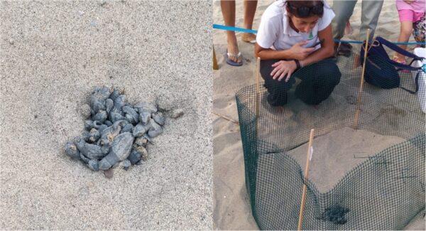 maiori tartarughe